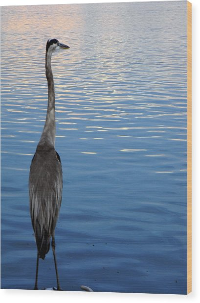 Great Blue Wood Print by Christy Usilton