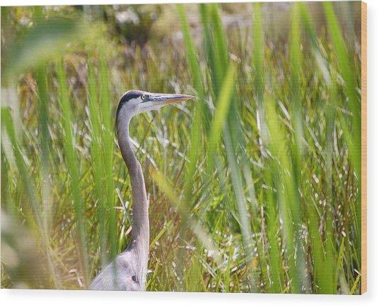 Great Blue Heron In Reeds Wood Print