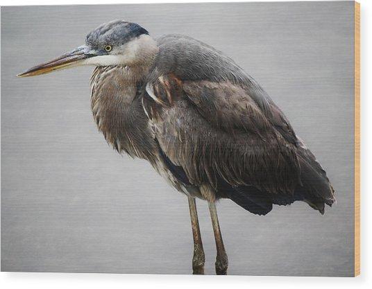 Great Blue Heron In The Marsh Wood Print by Paulette Thomas