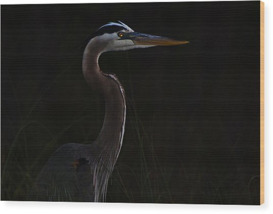 Great Blue Heron In The Sea Oats Wood Print