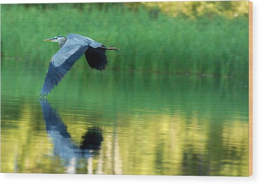 Great Blue Heron On Golden Pond Wood Print