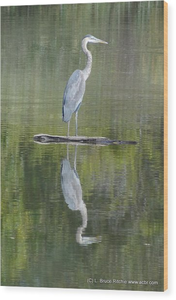 Great Blue Heron On Lake Chipican Wood Print
