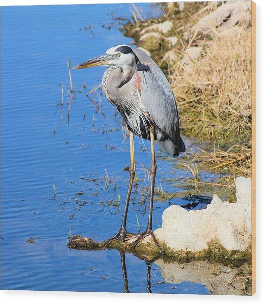 Great Blue Heron Resting Wood Print by Suzie Banks