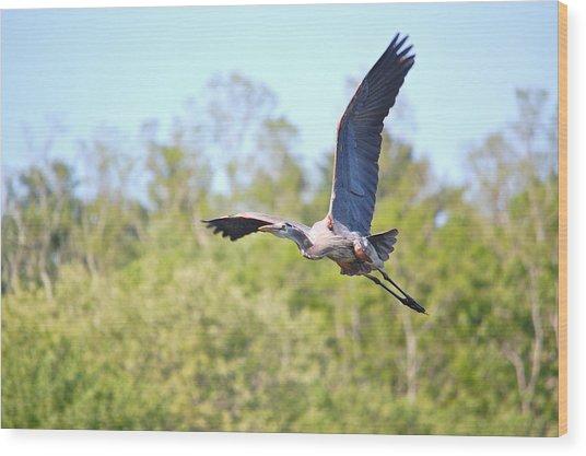 Great Blue Heron Underbelly Wood Print