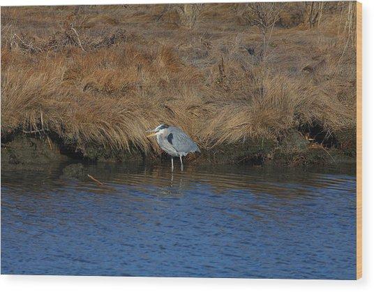 Great Blue Heron7 Wood Print