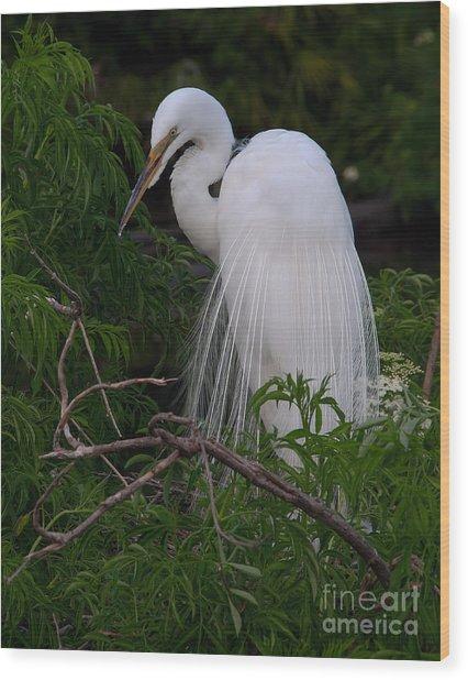 Great Egret Nesting Wood Print