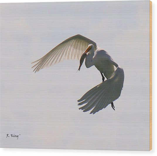 Great Egret Successful Fishing Wood Print