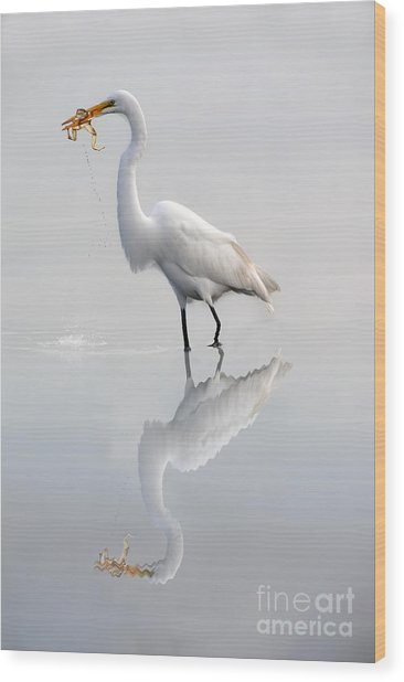 Great Egret With Lunch Wood Print