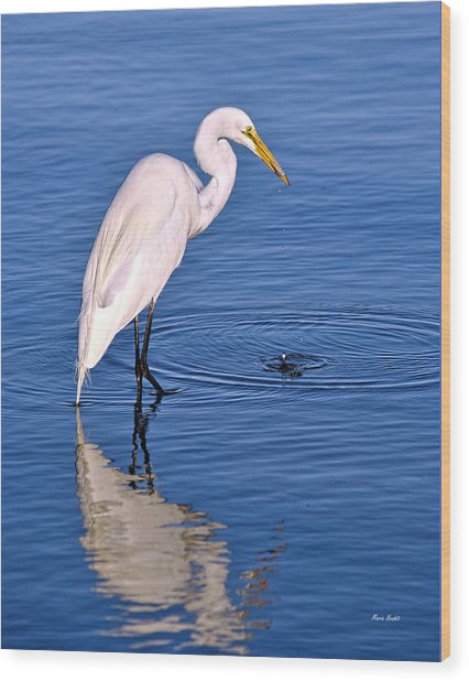 Great Egret With Shrimp Wood Print