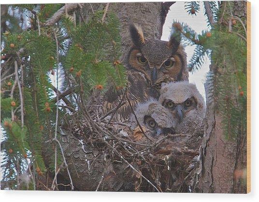 Great Horned Owl Nest Wood Print
