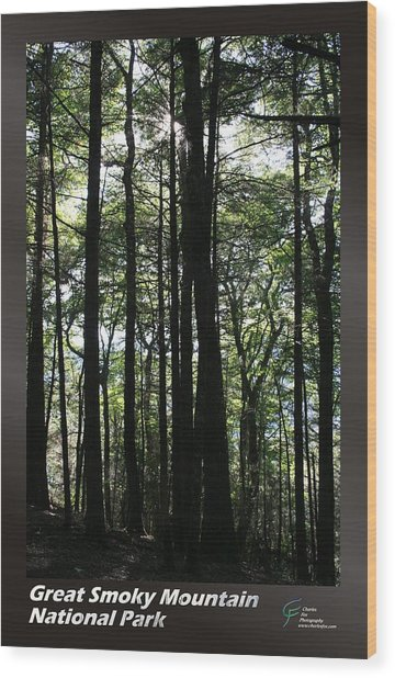 Great Smoky Mountains Np 003 Wood Print by Charles Fox