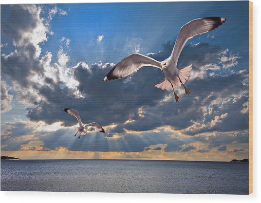Greek Gulls With Sunbeams Wood Print