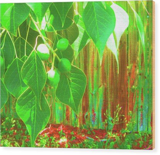 Green Curtain Wood Print by Juliana  Blessington