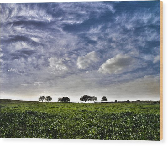 Green Fields And Blue Sky Wood Print