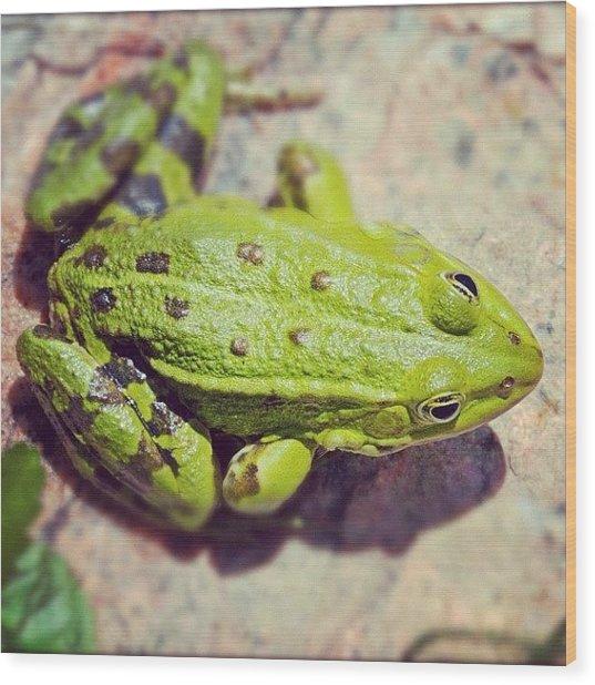Green Frog Sitting On Stone Wood Print