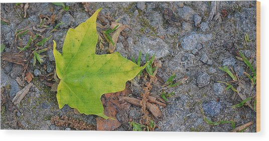 Green Leaf On Ground Wood Print