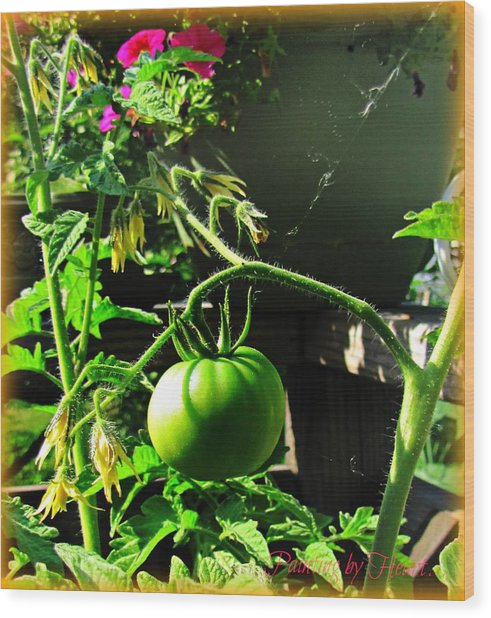 Green Tomatoes Wood Print