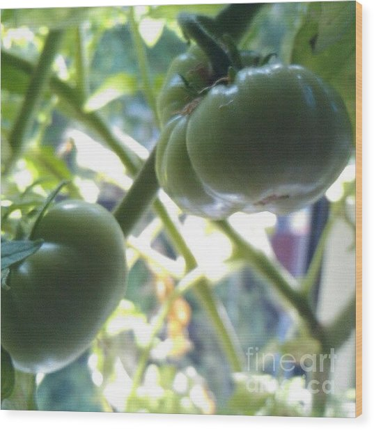 Green #tomatoes #instaprints Wood Print