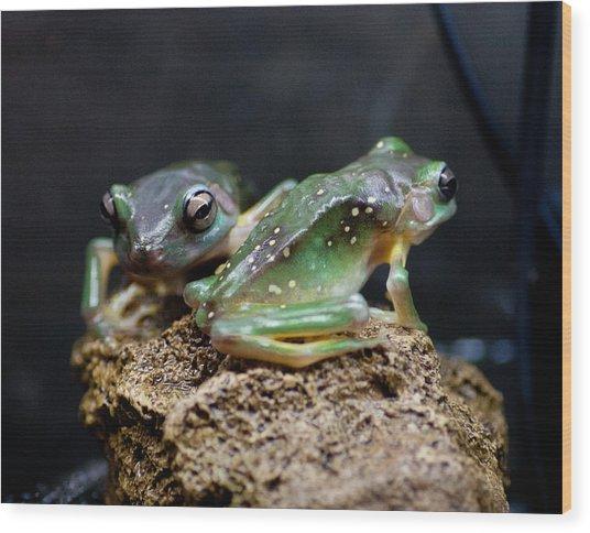 Green Tree Frogs Wood Print