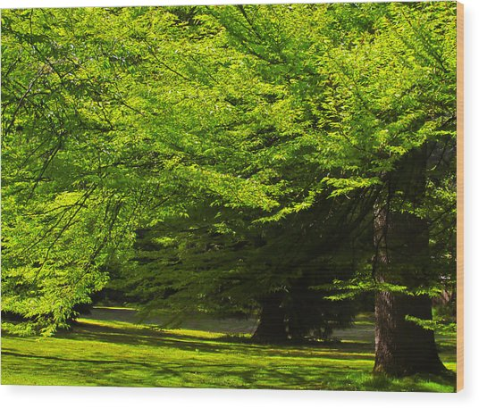Green Trees In Stanley Park Wood Print
