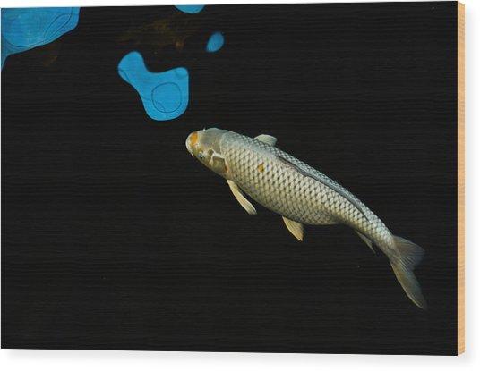 Grey Chagoi02 Wood Print