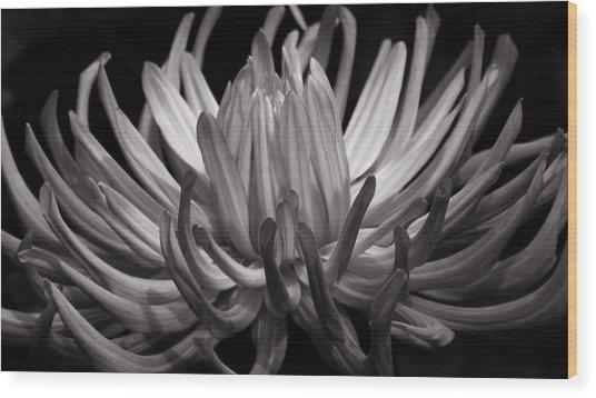 Grey Dahlia Wood Print