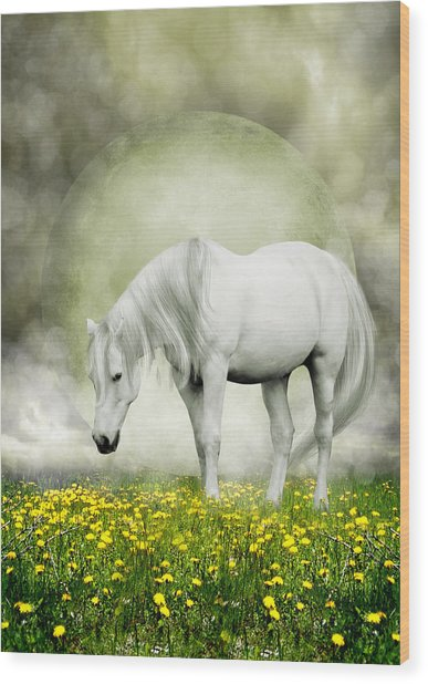 Grey Pony In Field Of Buttercups Wood Print