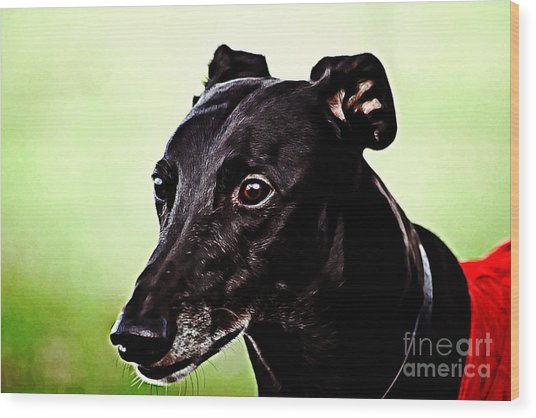 Greyhound Wood Print by The DigArtisT