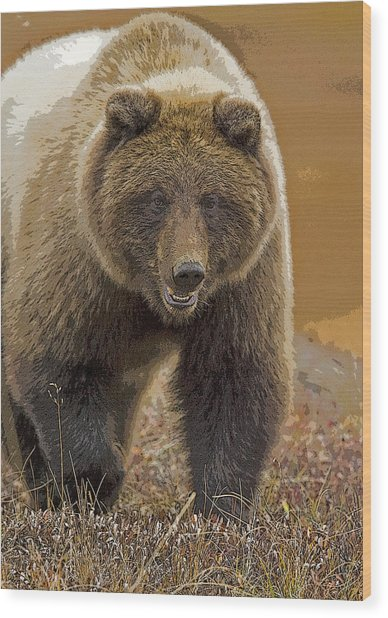Grizzly Bear- Eye To Eye- Abstract Wood Print