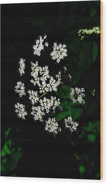 Ground-elder Wood Print
