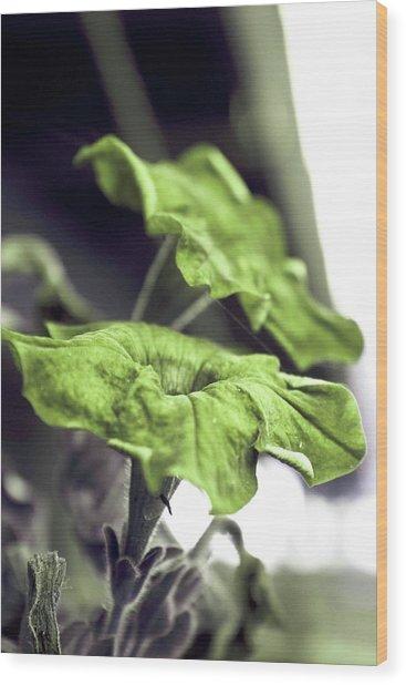 Growth Wood Print by Dax Ian