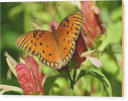 Gulf Fritillary Butterfly On Flower Wood Print