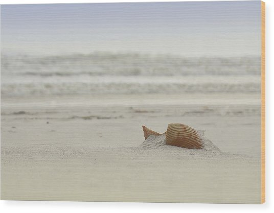 Gulf Shore Shell Wood Print
