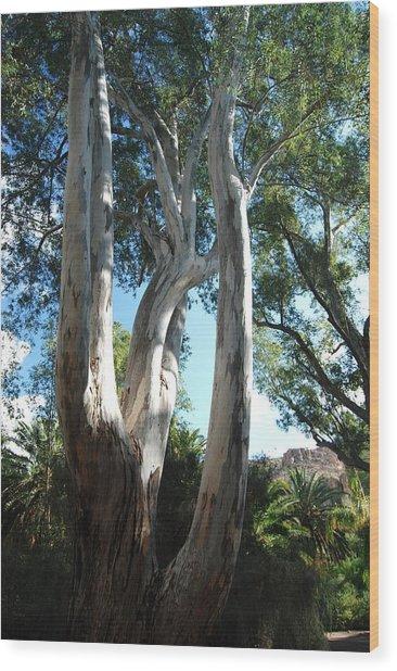 Gum Trees Wood Print