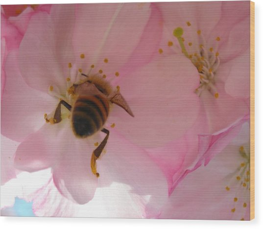 Hangin' With The Honey Bee Wood Print by Stacy Lanyon