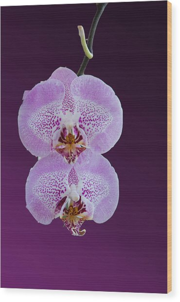 Hanging Orchids Wood Print