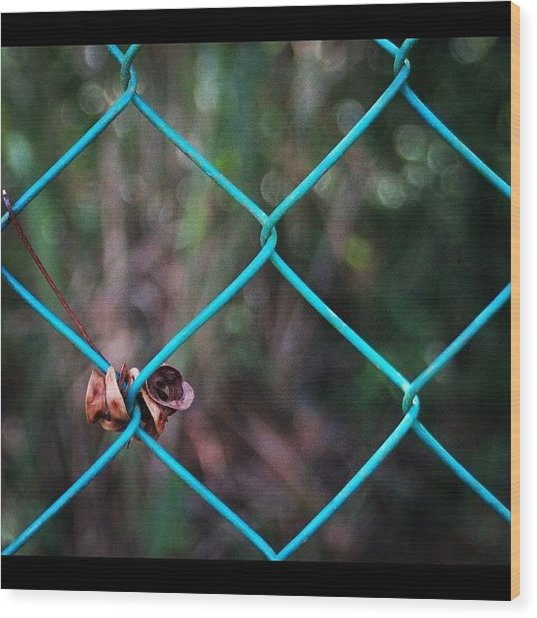 Hanging To The Fence, By My Lens Wood Print