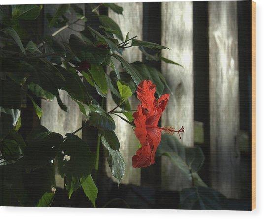 Happy Hibiscus Wood Print by Al Cash