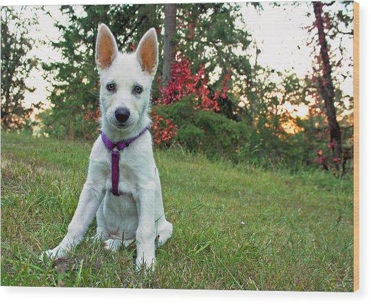 Happy Puppy Wood Print