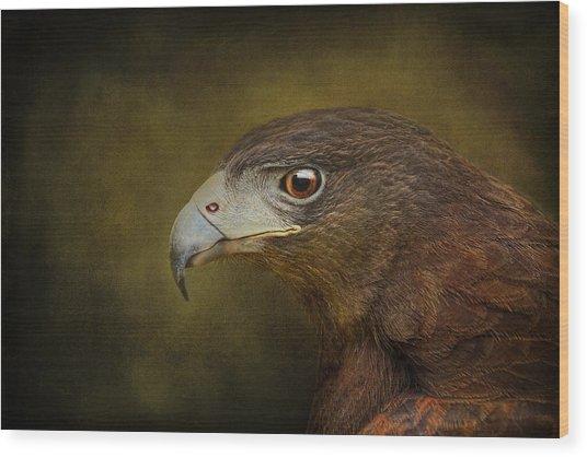 Harris Hawk Profile Wood Print
