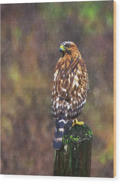Hawk In The Rain Wood Print
