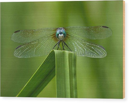 Head On Dragonfly Wood Print