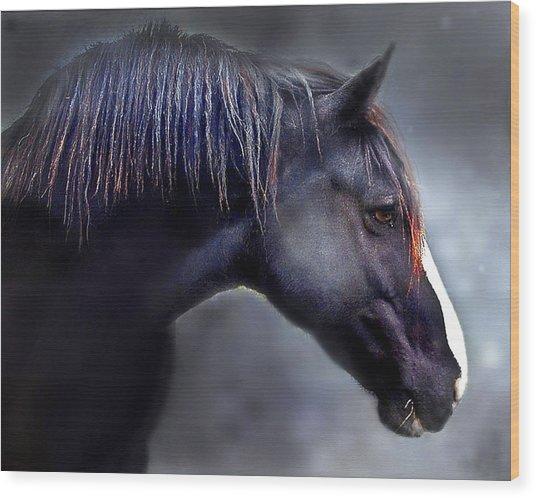 Hercules The Black Stallion Wood Print by Dorothy Walker