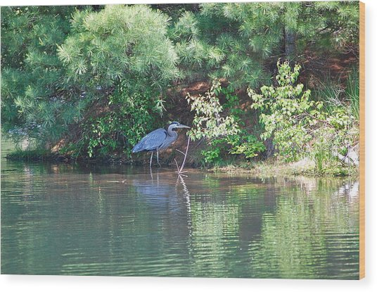 Heron Under Pines Wood Print