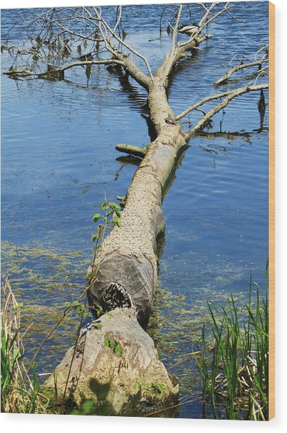 Herrick Lake Wood Print by Todd Sherlock