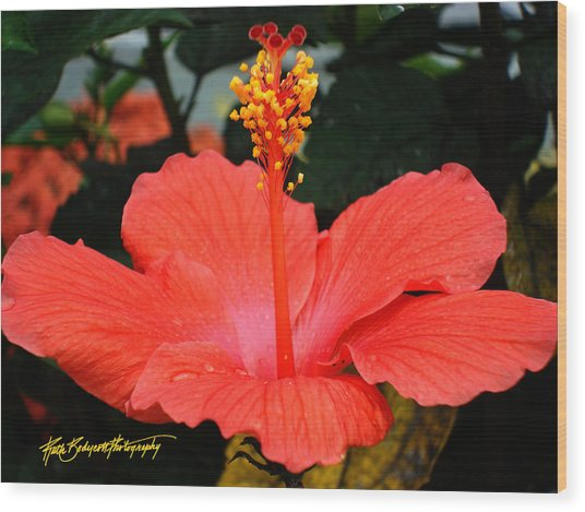 Hibiscus Bowl Wood Print by Ruth Bodycott
