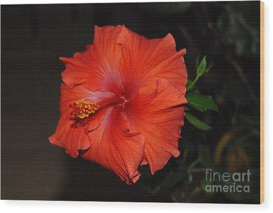 Hibiscus Close Up Wood Print