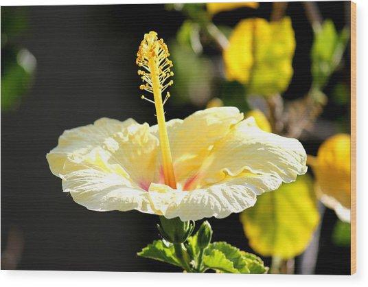 Hibiscus Rising Wood Print