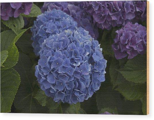 Hidrangea Wood Print