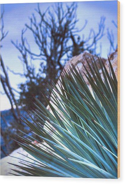 High Desert Cactus Wood Print by Jeffery Reynolds